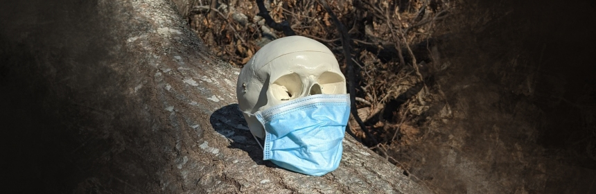 Photograph of a fake human skull sitting on a lop in a forest in winter. It's wearing a blue surgical mask.